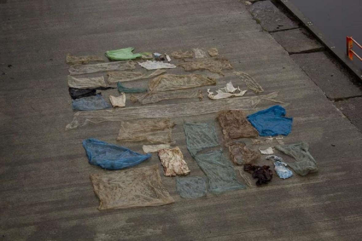 Obsah žaludku vorvaňovce nalezeného v Norsku