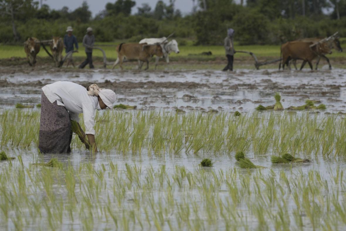 Farmáři v Kambodži