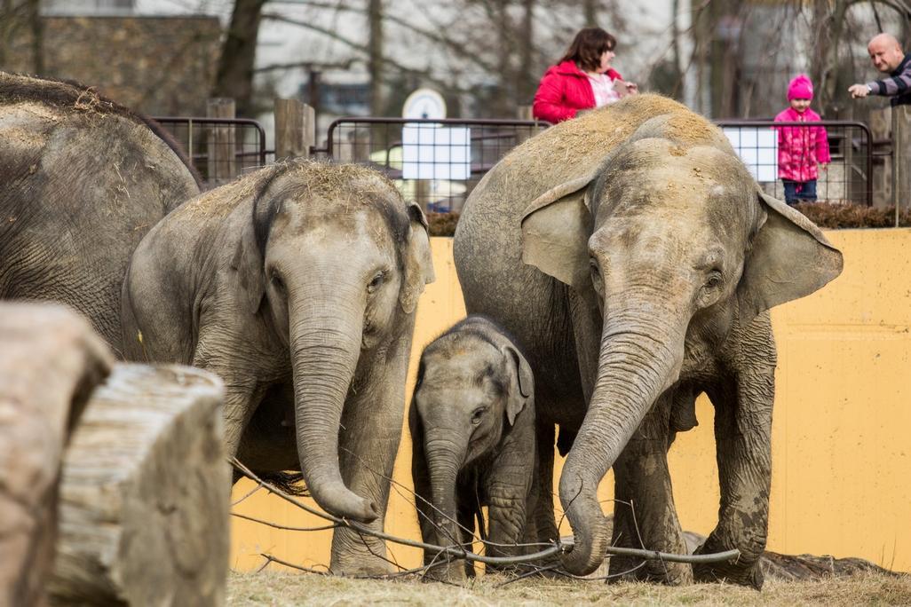 Sloní areál