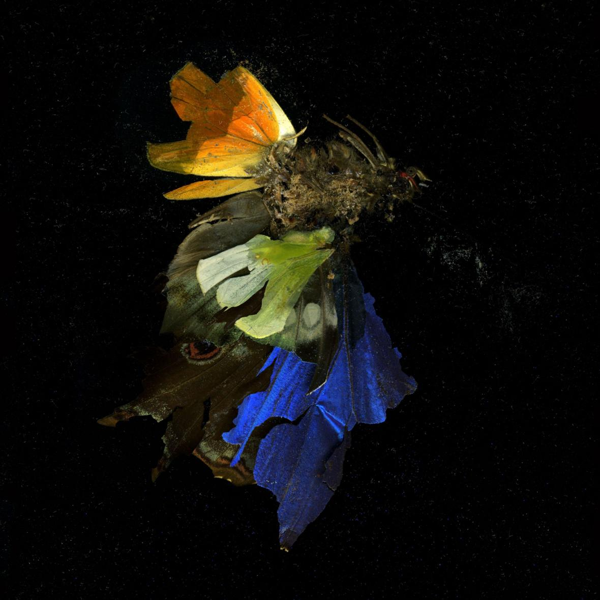 Mat Collishaw / Insecticide 15, 2009