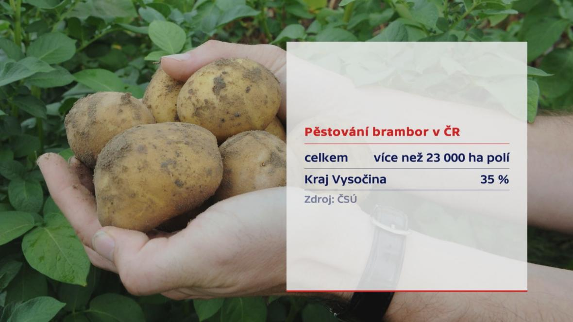 Brambory - pěstování