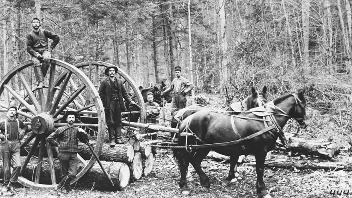 První koně do Austrálie přivezli Evropané