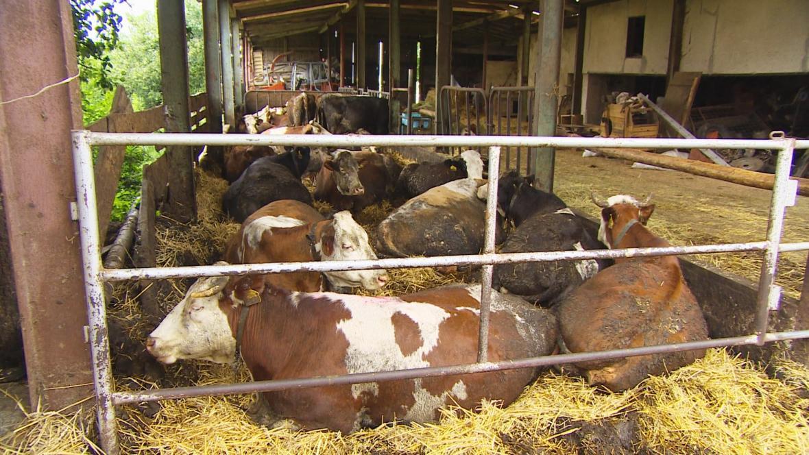 Chovatel z Táborska podle veterinářů špatně zachází se zvířaty