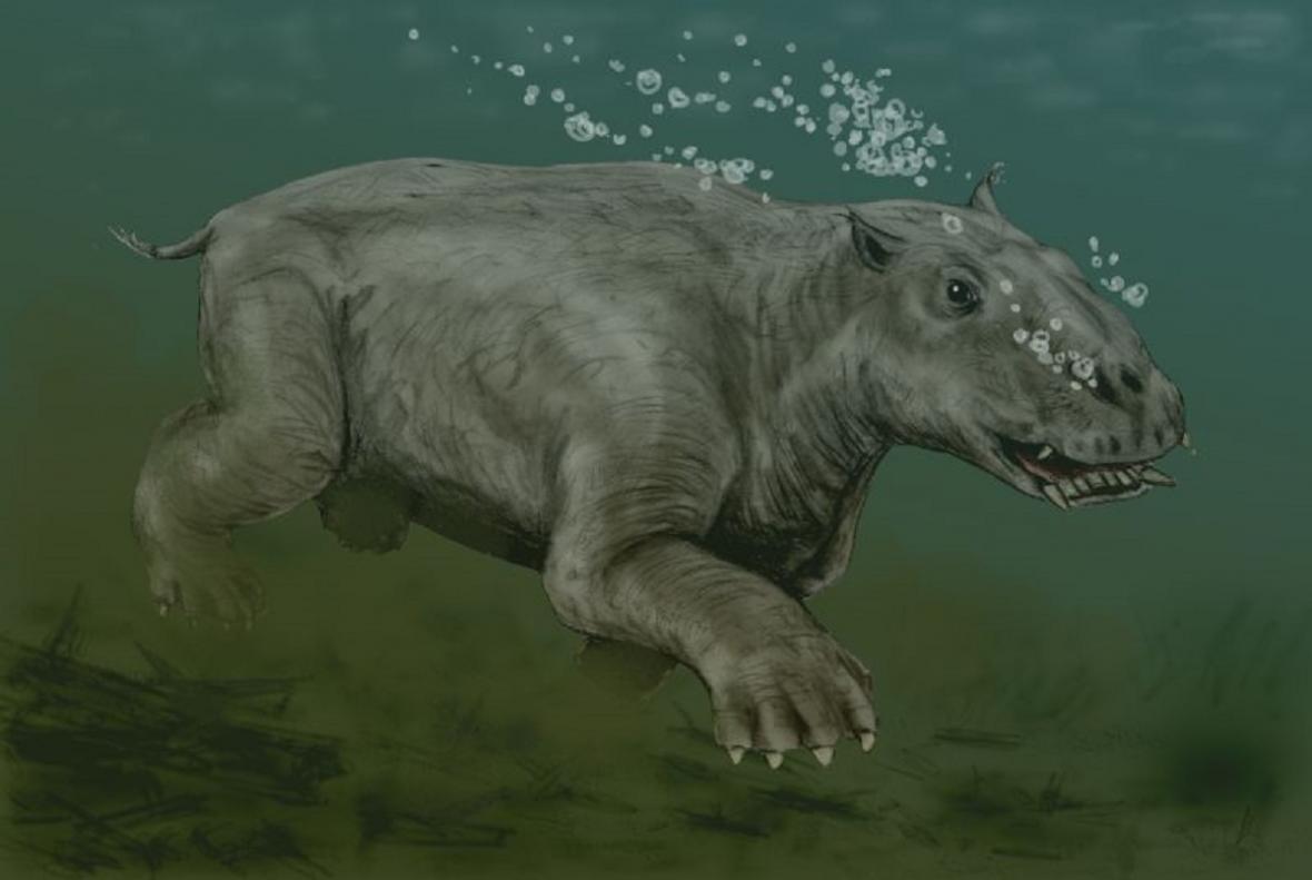 Starší představa o vzhledu Paleoparadoxia