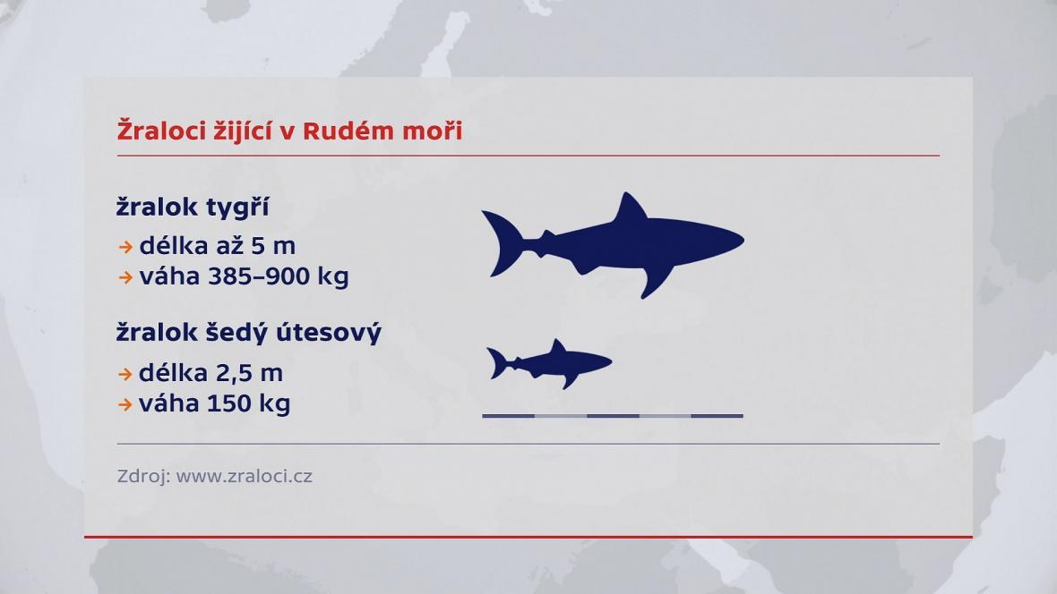 Žraloci v Rudém moři