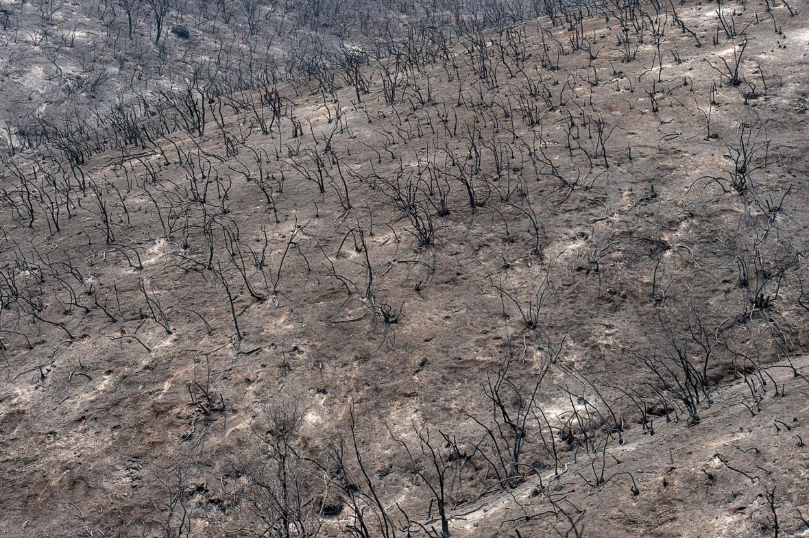 V oblasti Mendocino shořely celé lesy
