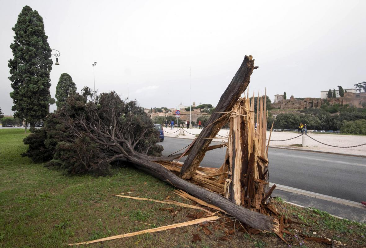 Spadlý strom po vichřici v Římě