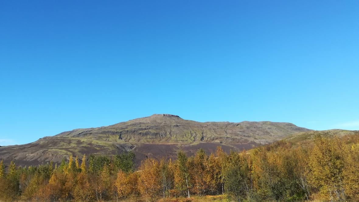 Malý lesík u gejzíru Geysir oblas Haukadalur