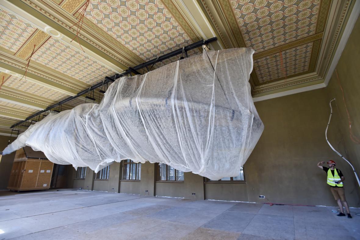 Kostra plejtváka myšoka během generální rekontrukce Národního muzea