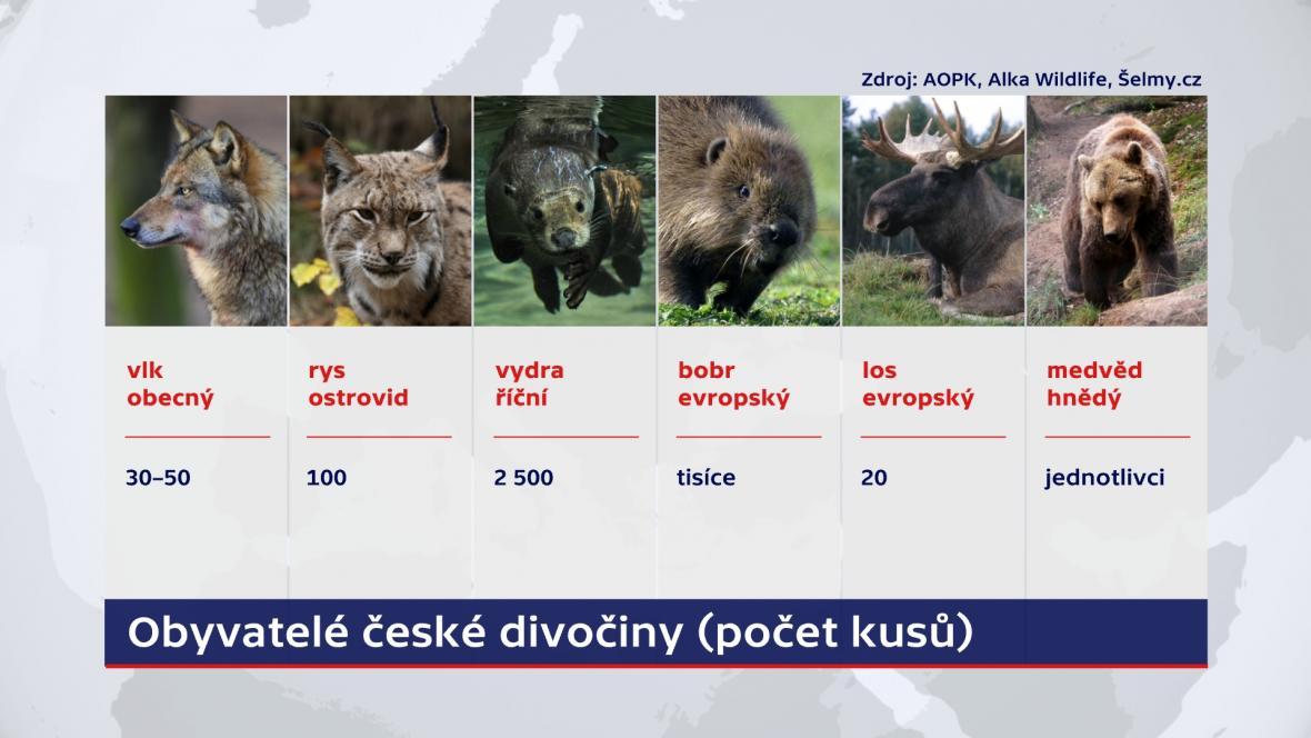Obyvatelé české divočiny