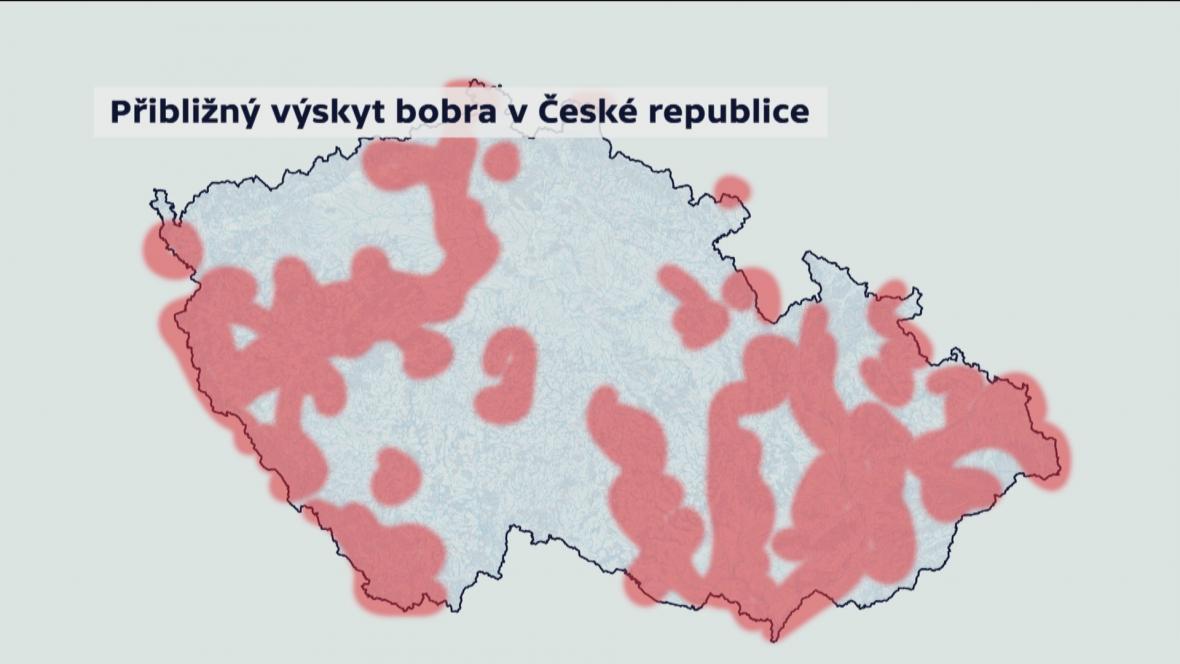 Přibližný výskyt bobra v České republice