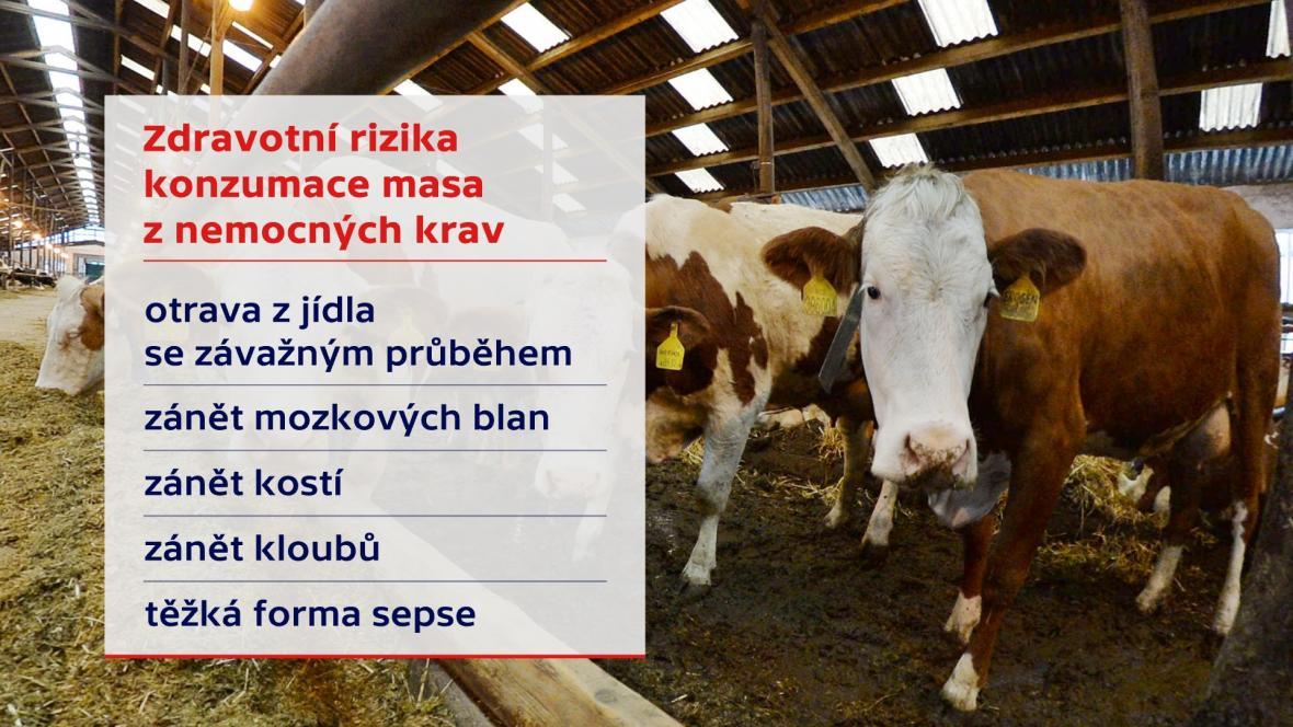 Zdravotní rizika konzumace masa z nemocných krav