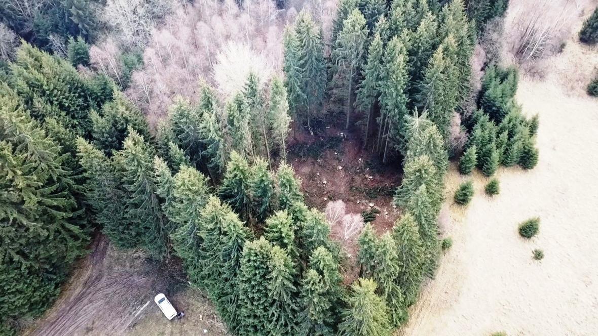 Místa po tzv. kruhovém zásahu, kde dřevorubci vykáceli poškozené smrky