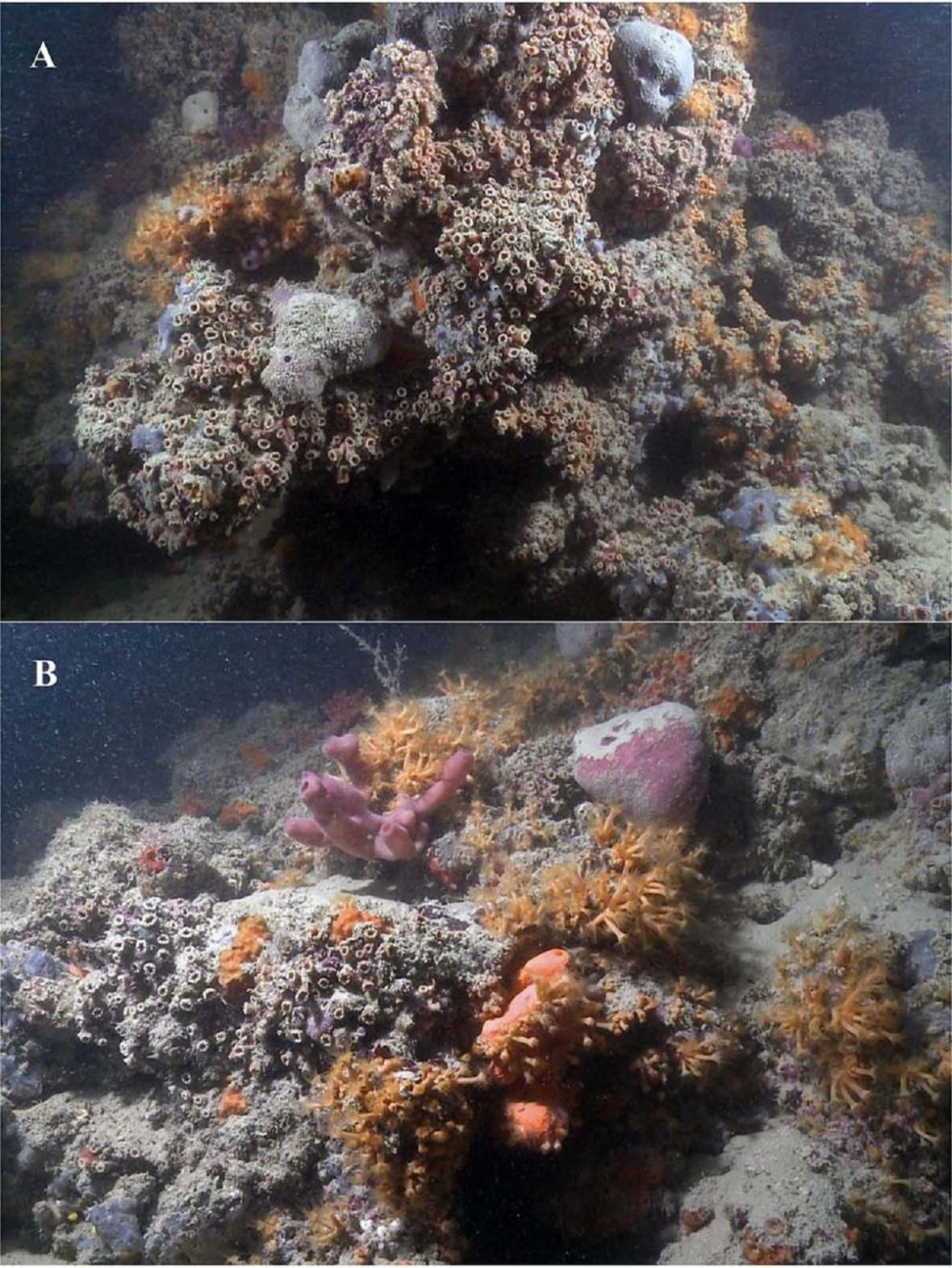 Korálový útes u Itálie