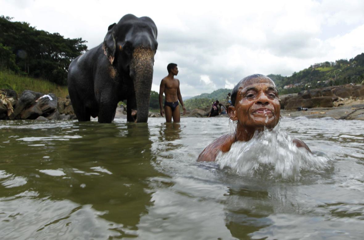 Koupání slonů na Srí Lance