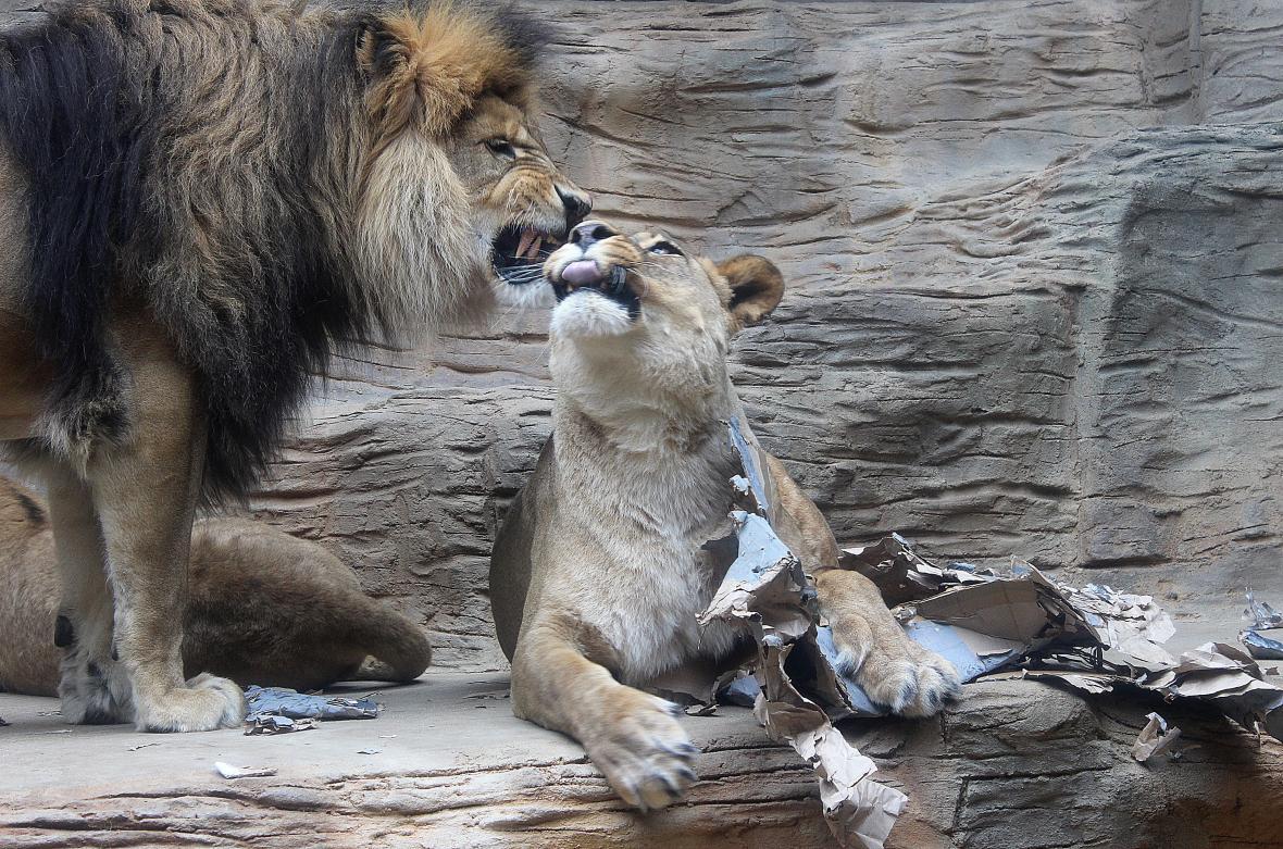 Hlavním cílem výroby hraček je zvířata zabavit a rozptýlit