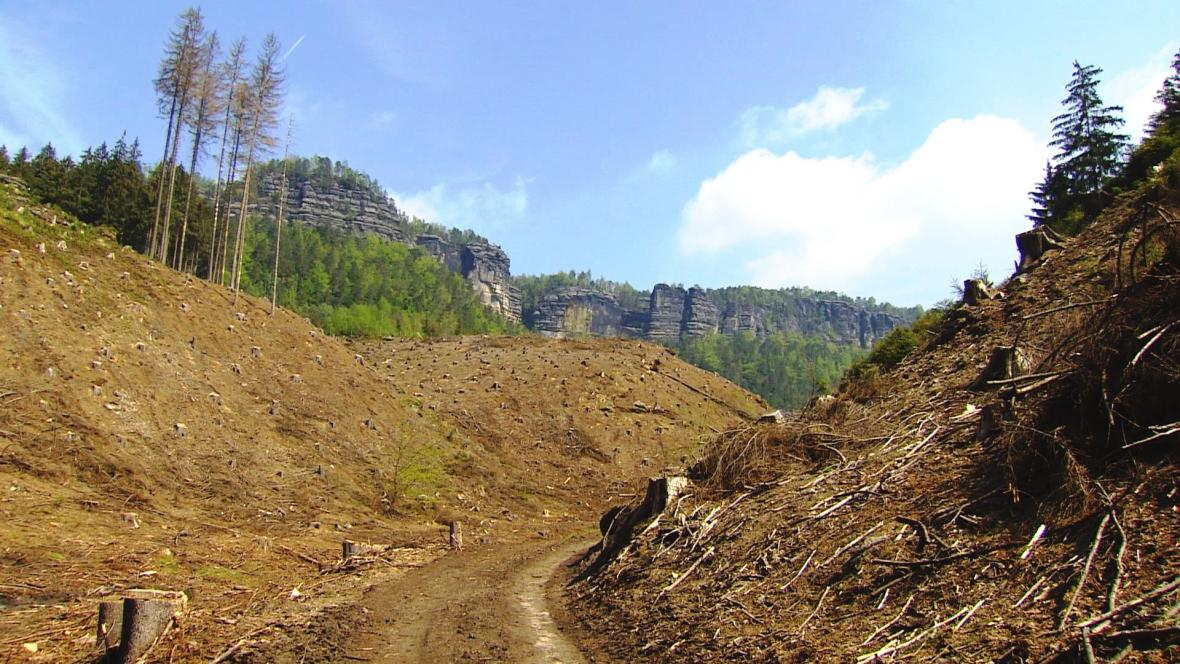 Národní park České Švýcarsko ukončí kácení kvůli kůrovci