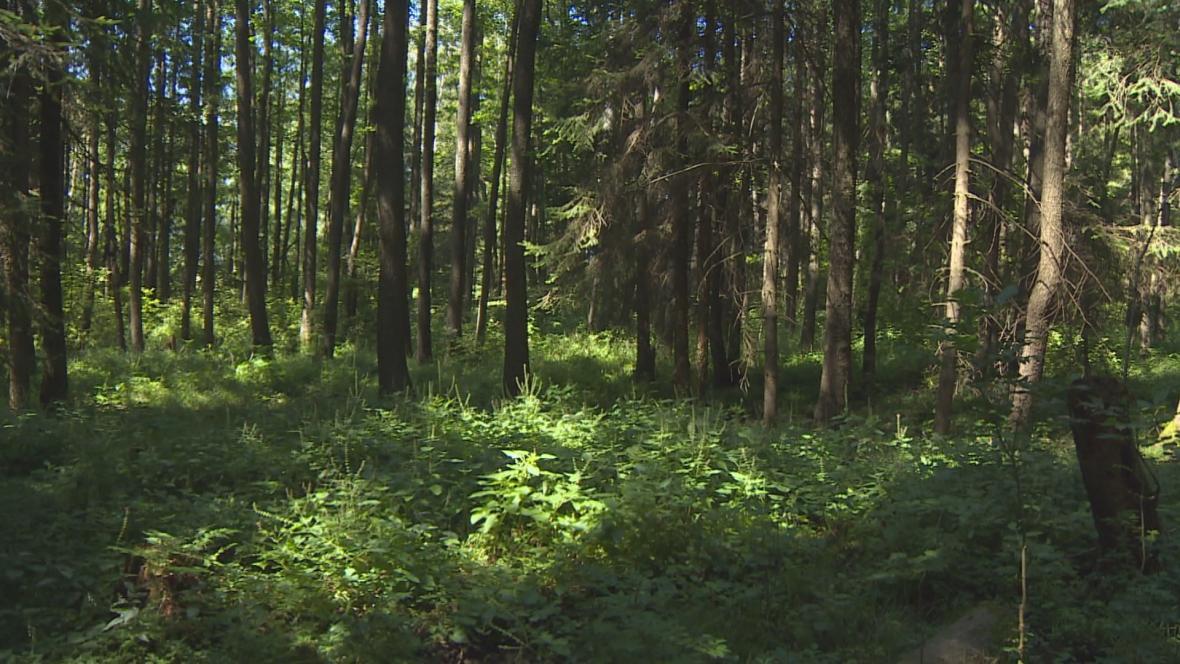Část Vršovské Olšiny, ve které voda zůstává, je pokryta vegetací