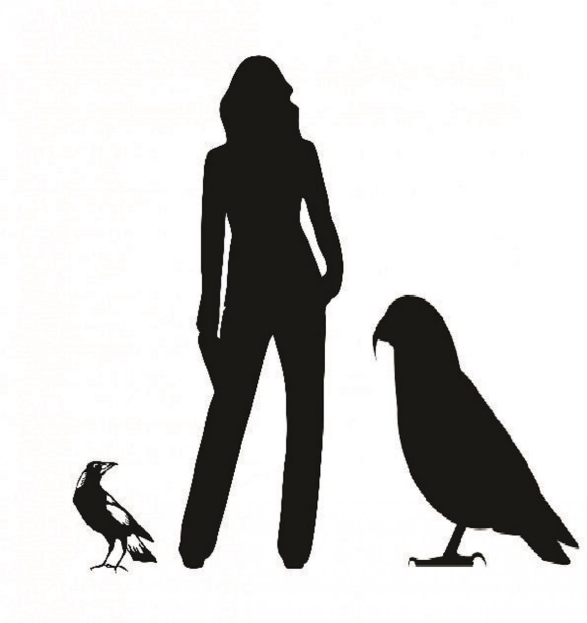 Srovnání flétňáka australského , člověka a největšího papouška světa