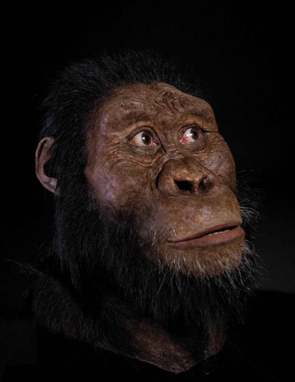 Rekonstrukce australopitheka MRD-VP-1/1