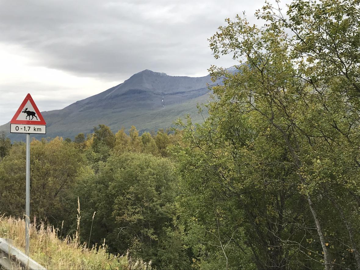 Upozornění na divokou zvěř je v Norsku poněkud odlišné