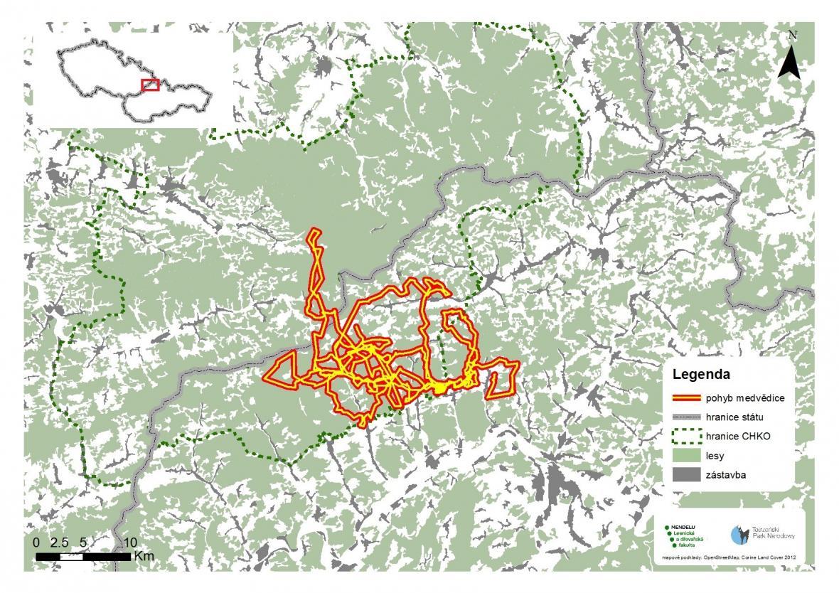 Mapa pohybu medvědice