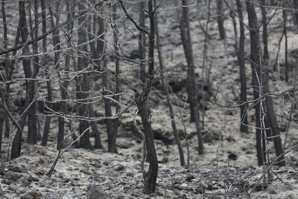 Shořelé lesy v pohoří Šúf