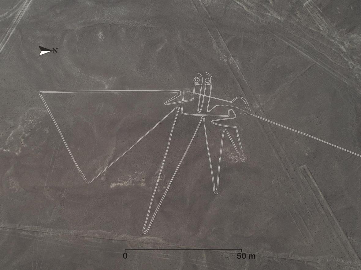 Pták na planině Nazca - vylepšená fotografie