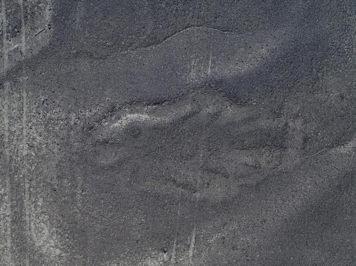 Ryba na planině Nazca