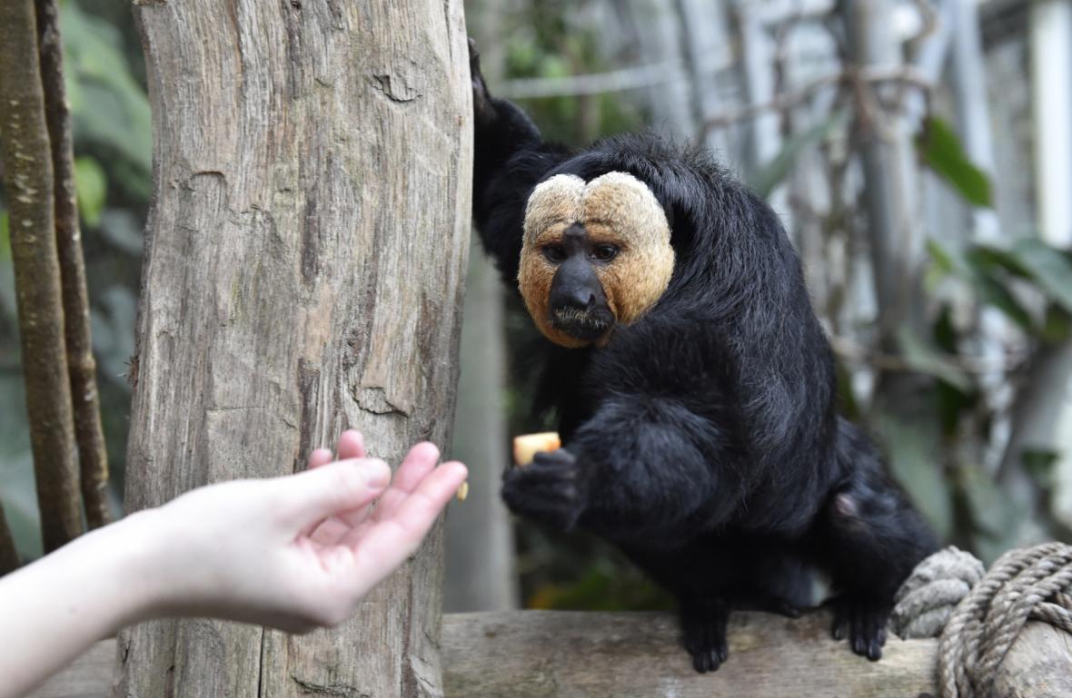 Samec Rasty přišel do zlínské zoo z Dánska
