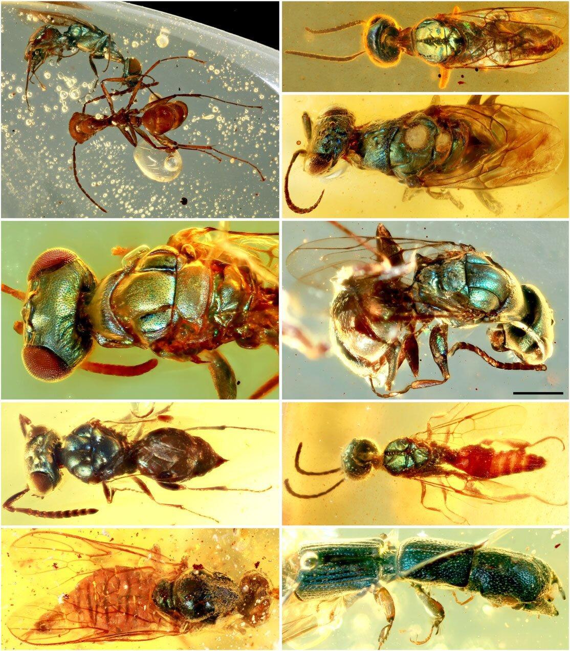 Hmyz zachovaný v jantaru