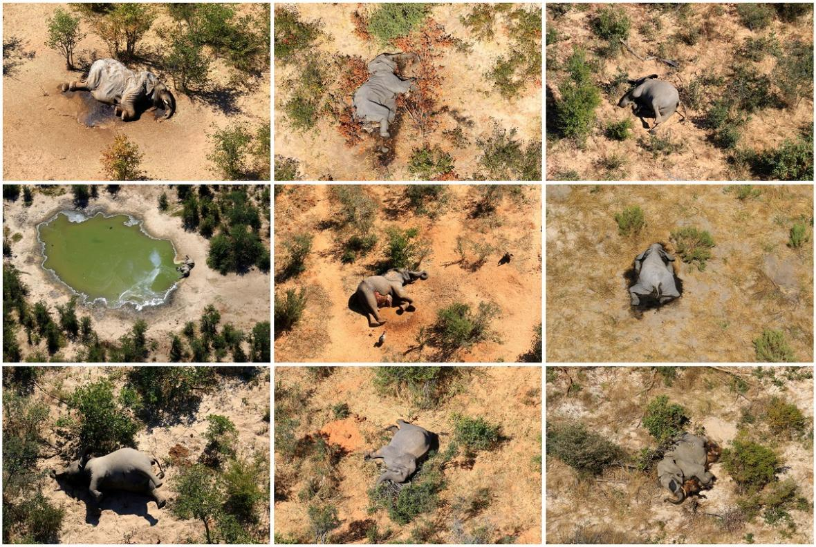 Mrtví sloni v Botswaně
