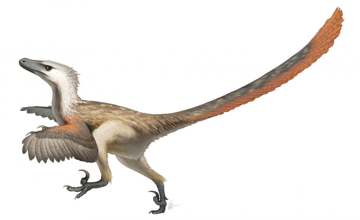 Novější rekonstrukce velociraptora