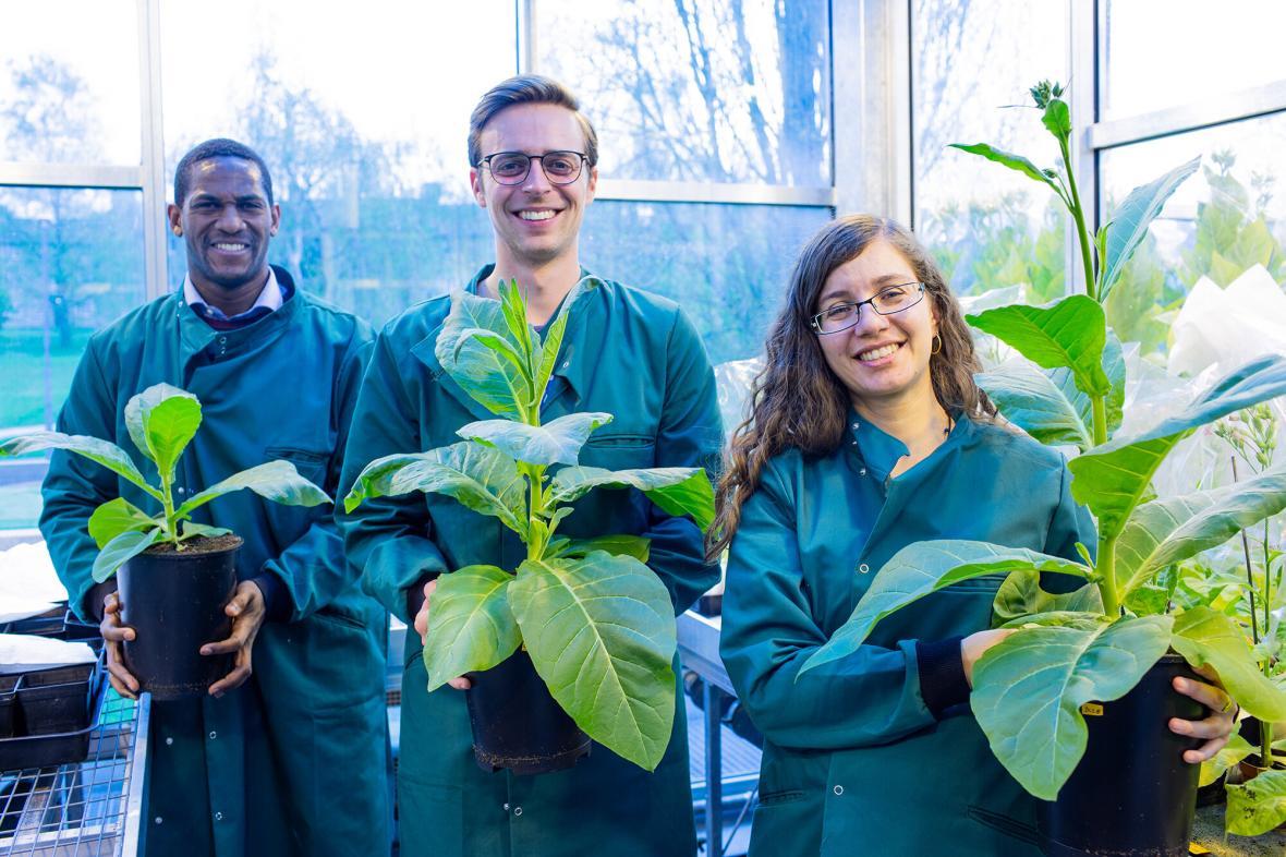 Vědci s upravenými rostlinami