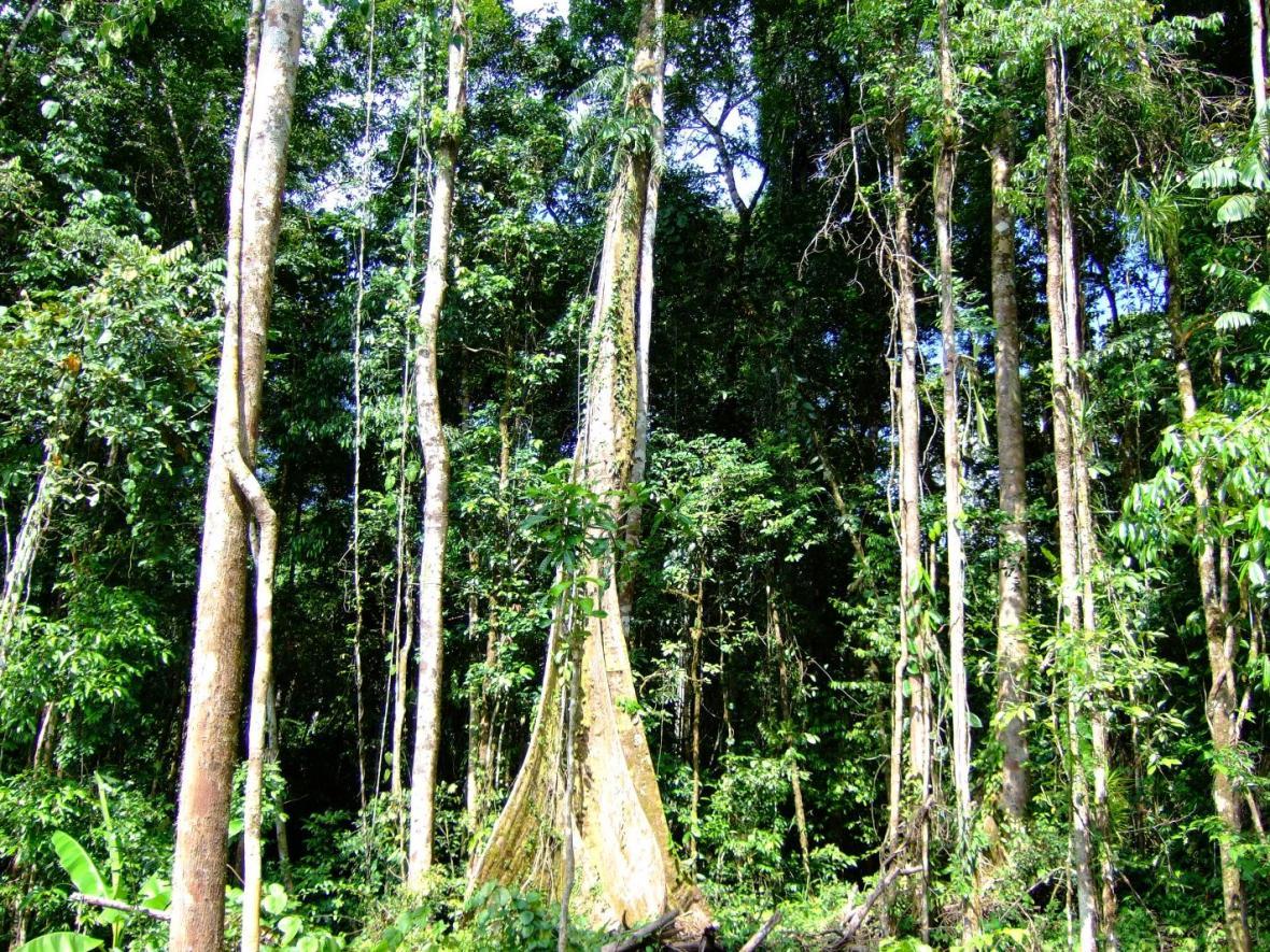 Papuánský les