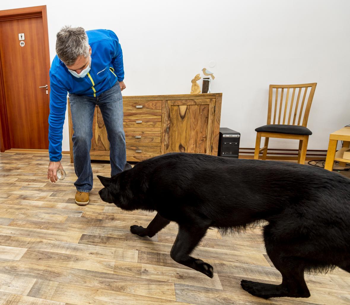 Gustav Hotový cvičí své psy na vyhledávání covidu