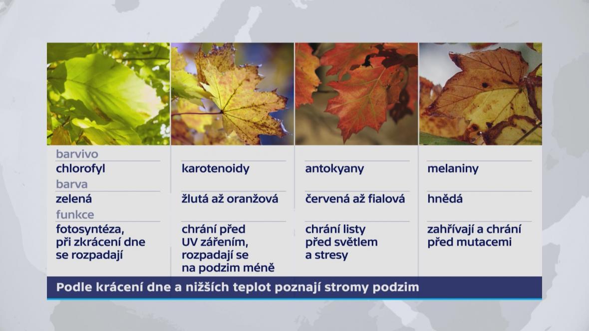 Barvy listí