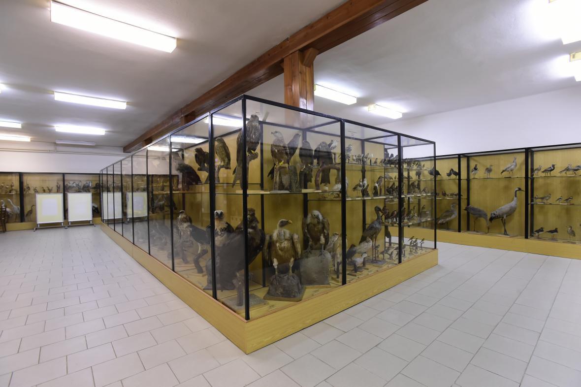 Současná expozice českých ptáků dostane novou pob´dobu