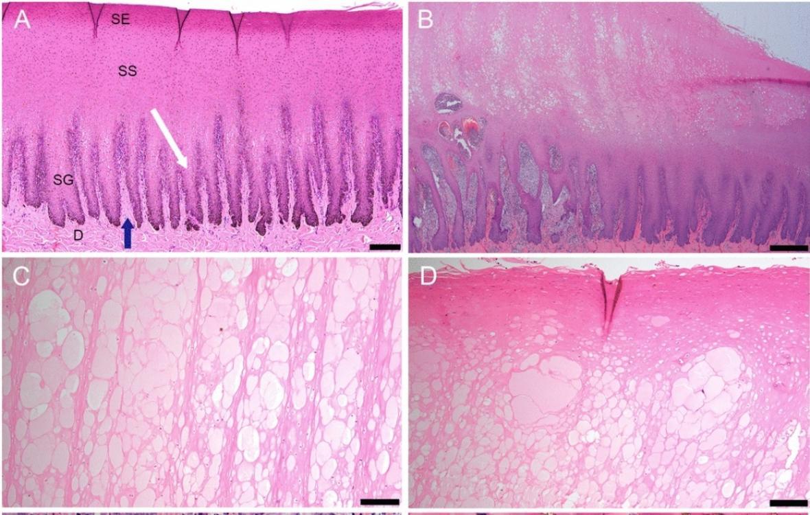 Poškození kůže u delfínů pod mikroskopem
