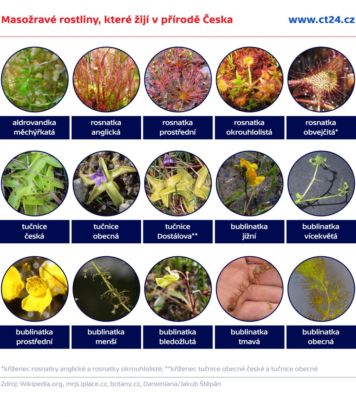 Masožravé rostliny, které žijí v přírodě Česka