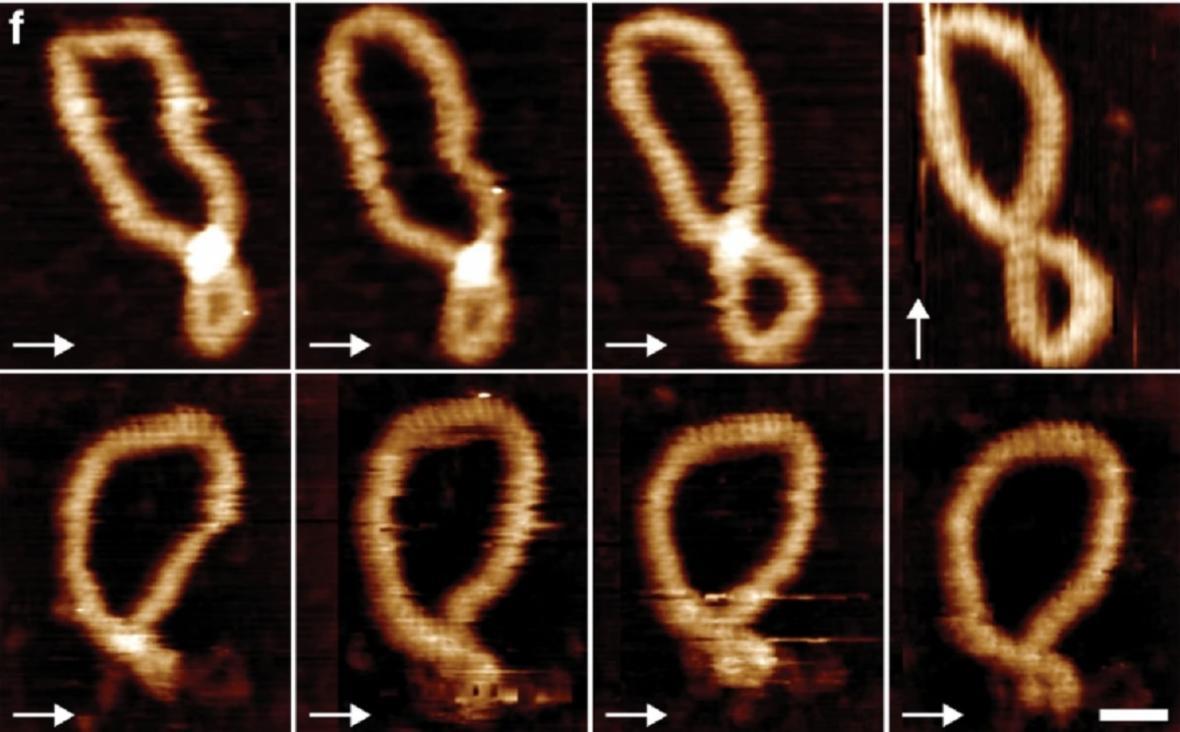 DNA v pohybu