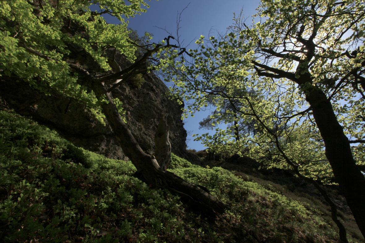 Přírodní rezervace Krkanka