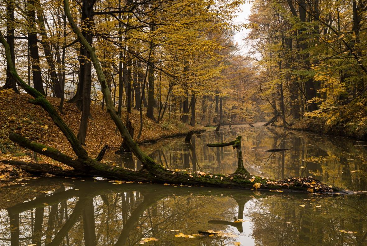 Vodní náhon,  Přírodní rezervace Rezavka
