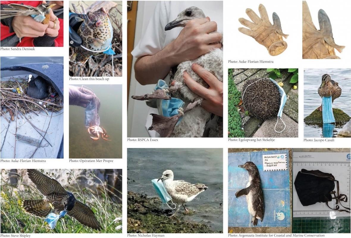 Zvířata poškozená pandemickým odpadem
