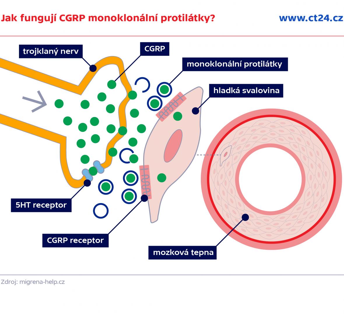Jak fungují CGRP monoklonální protilátky?
