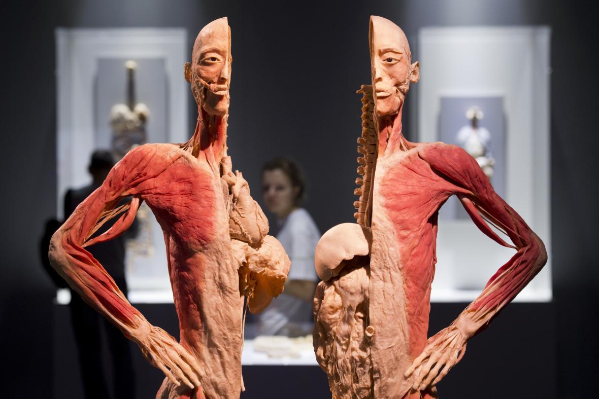 Výstava Bodies na pražském Výstavišti