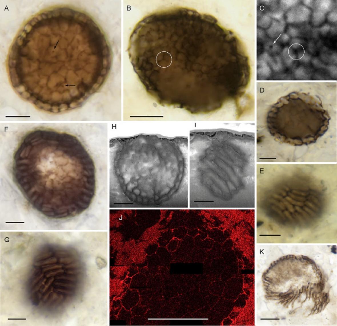 Různá zobrazení organismu
