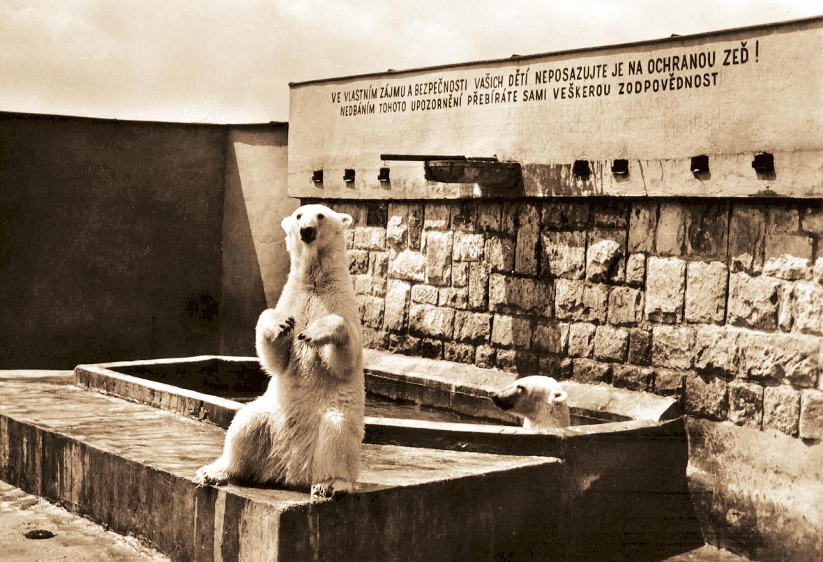 Pavilon ledních medvědů (rok 1960), dnes sloninec