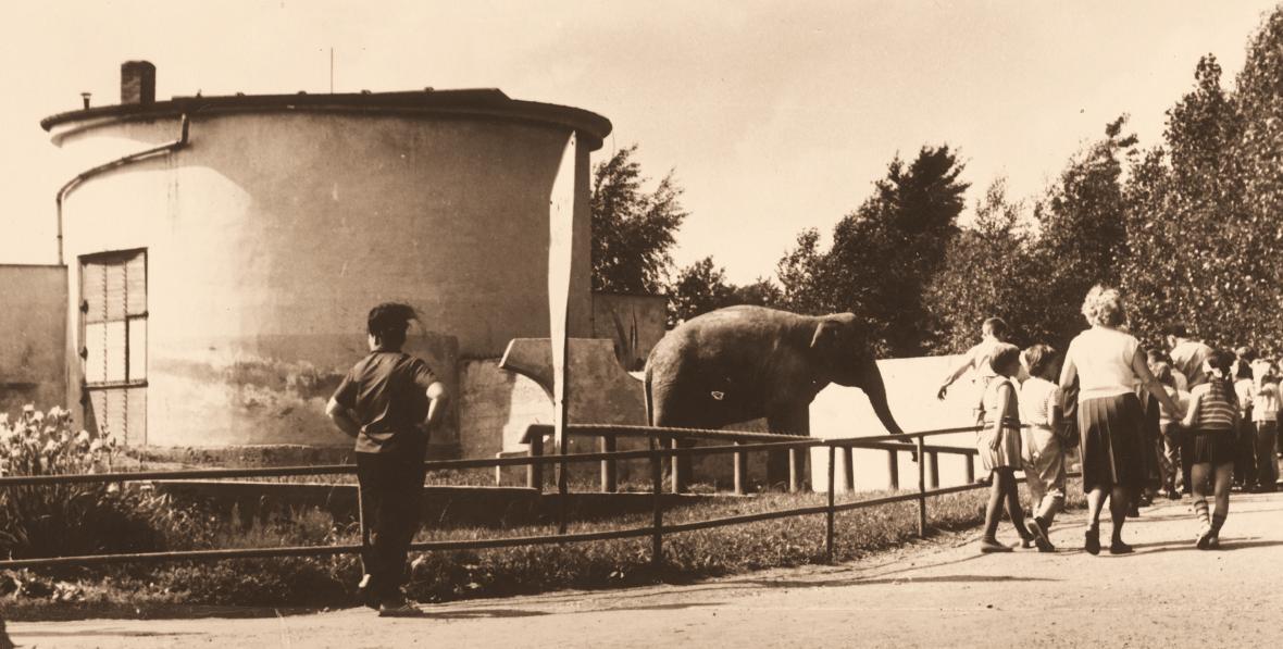První pavilon slonů (rok 1963), dnes zde stojí Africká savana.
