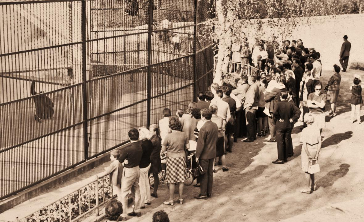Venkovní výběh šimpanzů (rok 1965)